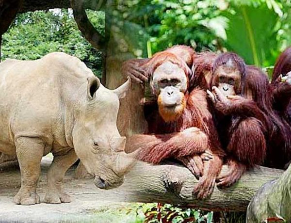 Visit our Zoos Today – Great Discount Awaits You!